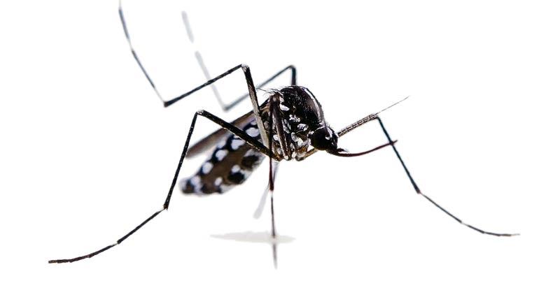 anti-zanzara-geotre