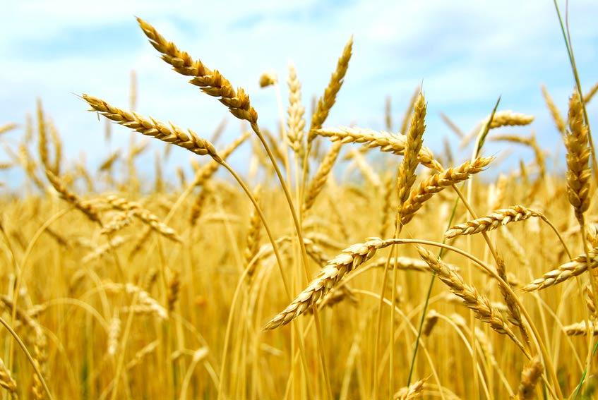 sementi-agricole