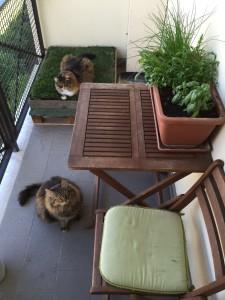 prato su balcone